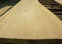 Live sawn sycamore lumber