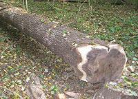Veneer log